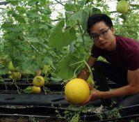Nghệ An nhân rộng mô hình khuyến nông